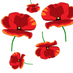 falling poppies